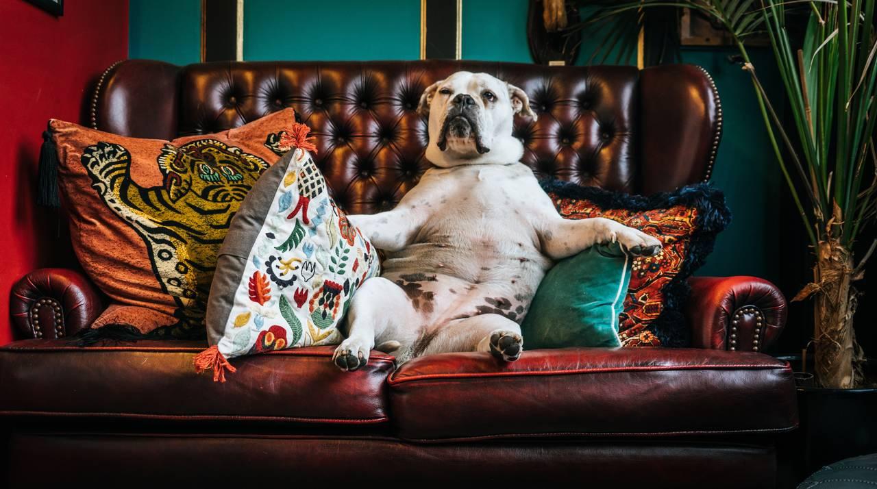 CouchSurfing toswietne budzetowe rozwiazanie