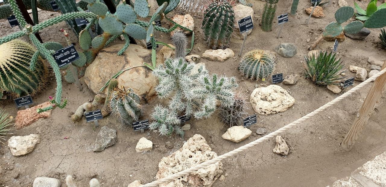 Kaktusy zogrodów krolowej warii