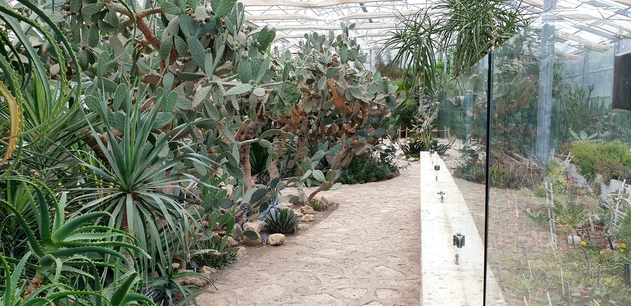 Olbrzymie okazy kaktusów z ogrodów królowej marii