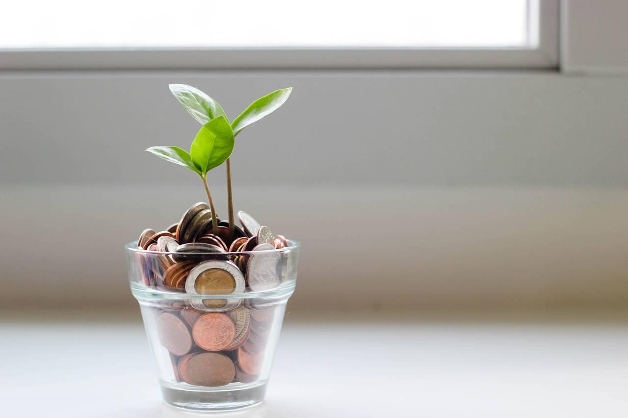 Roślinka rosnąca w doniczce zapelniona monetami jako symbol tego, że nie warto oszczędzać pieniędzy na wszystkim