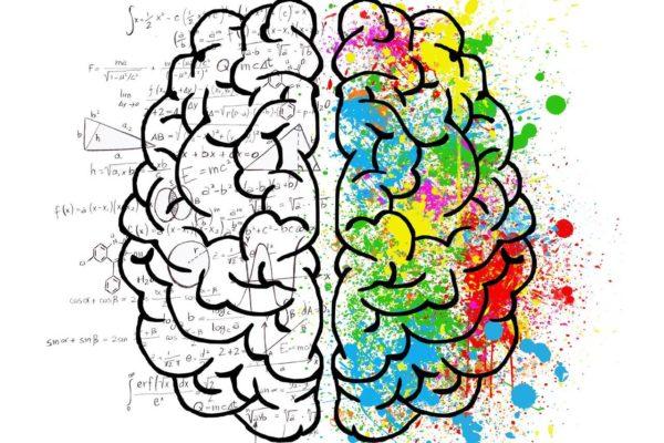 Grafika przedstawiająca mózg jako symbol naszej osobowości którą możemy sprawdzić testem PERSO.IN